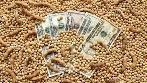 Jueves sin grandes cambios en los valores negociados, en el mercado de granos local
