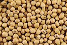 Finalizó la cosecha de soja 2019-2020 en el país