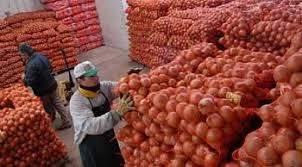 Empaques y cámaras de frío deberán declarar el origen de la cebolla que procesen