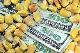 Caída de precios en Chicago y fuerte interés por maíz en el mercado local de granos