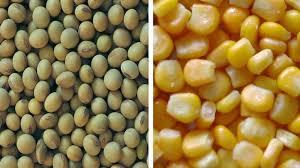 La soja y el maíz caen en los mercados mundiales por los temores al COVID-19