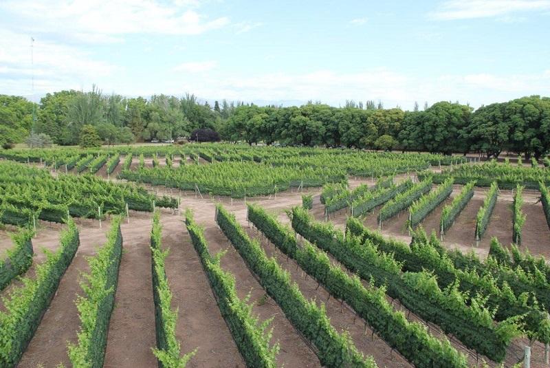 La calidad del Malbec depende de la orientación de la plantación