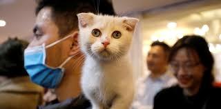 """Un estudio revela que los felinos son """"susceptibles"""" al coronavirus y pueden contagiarse entre ellos"""