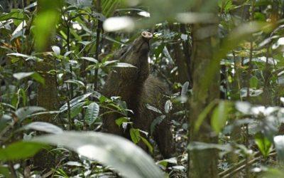 ¿Por qué la deforestación y la pérdida de especies abren la puerta a nuevas enfermedades?