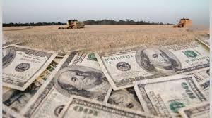 La soja cayó un 4,8 % y el maíz un 3,2 % durante la semana en Chicago: cuánto se paga en Rosario
