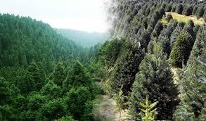 Se necesitan medidas urgentes para salvaguardar la biodiversidad de los bosques de América Latina y el Caribe