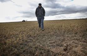 Prevén frío seguido por moderado ascenso térmico en la mayor  parte del área agrícola