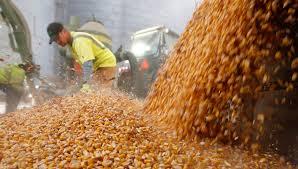 Mercado local de granos con ofertas variadas