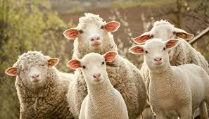 Los presidentes de la Comisión de Enlace disertaron sobre el presente y el futuro de la actividad ovina