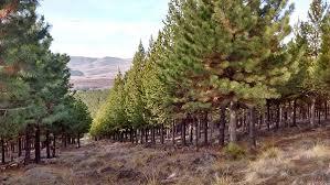 La actividad foresto industrial planea subirse al segundo tren de desarrollo