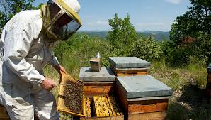 Federación Agraria se suma a las actividades para impulsar el consumo de miel en el país