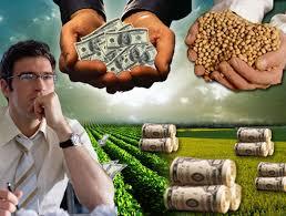 Mercado local de granos: Buena concurrencia de compradores en este inicio de semana, con precios de estables a la baja