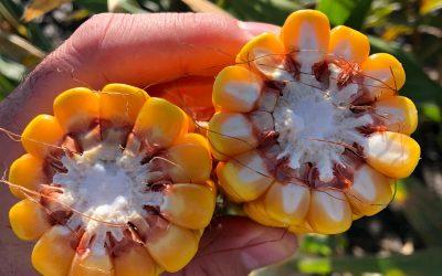 Buenas Prácticas Agrícolas: ¿Por qué los bioinsumos son clave para la producción sustentable?