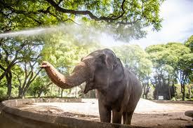 Trasladan mañana a la elefanta Mara a un santuario de Brasil