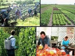 Empresa Agrícola: Son tiempos de atar los cabos posibles