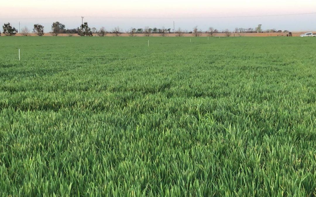 Incorporar el zinc, para lograr una buena cosecha desde la raíz