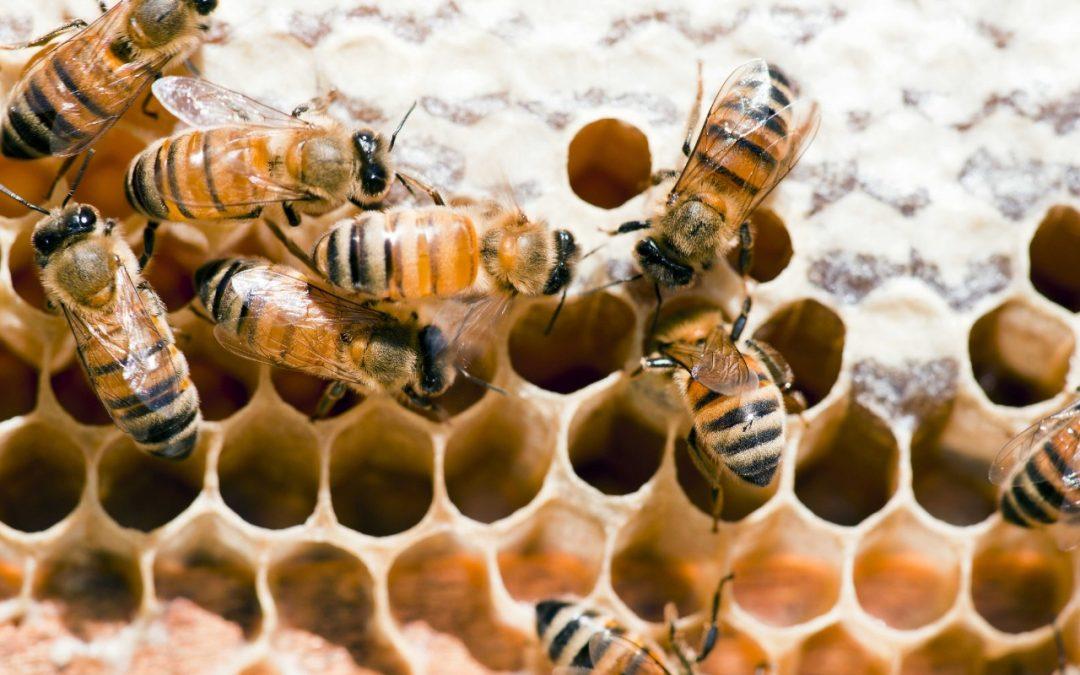 Se recomienda a los apicultores verificar las reservas alimenticias de sus colmenas