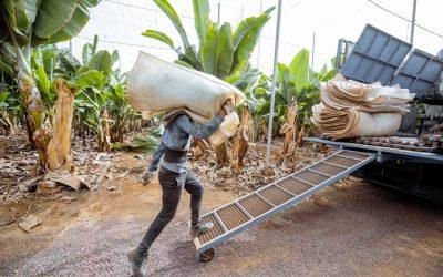 Comité de Agricultura de la Organización Mundial de Comercio analiza seguros, paquetes de estímulos y medidas sobre comercio agrícola