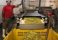 Generar biogás y biofertilizantes, a partir de residuos de frutas