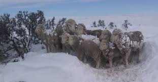 El Ministerio declara la emergencia agropecuaria y comienza la asistencia financiera y técnica a las zonas afectadas por las fuertes nevadas