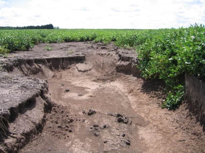 Erosión: cómo revertir la degradación del suelo