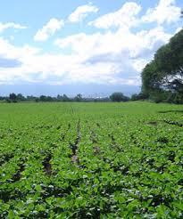 El riego por goteo revoluciona la producción tabacalera en Salta