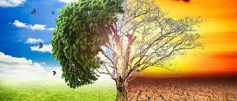 Fundación Silvestre: Mañana el mundo entra en default ambiental