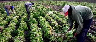 Agricultura destina más de $ 32 millones en proyectos para el sector hortícola agroecológico bonaerense