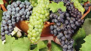 Los productores de uva en fresco de Mendoza y San Juan tienen plazo hasta el 4 de septiembre para inscribirse