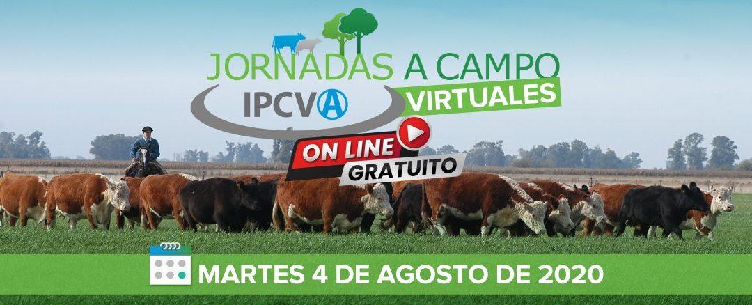 4 de agosto: jornada a campo virtual del IPCVA en Coronel Dorrego, ciclo completo en el suroeste bonaerense
