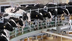 La producción de leche en América Latina y el Caribe: ¿Cómo estamos en relación con el resto del mundo?