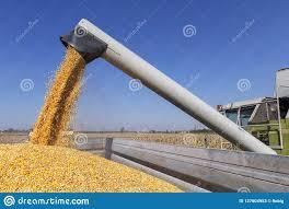 Terminó la cosecha argentina de maíz 2019/20: cuáles fueron las zonas productivas más destacadas