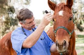 El 1 de octubre vence el plazo para la reacreditación en programas de sanidad animal