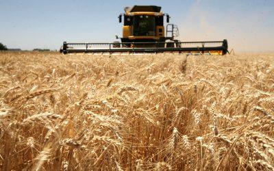 Pronostican cosecha 2020-2021 de 135 millones de toneladas