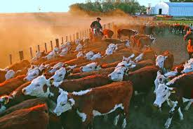 En los últimos 18 años se redujo 32,5% el número de  establecimientos ganaderos en Argentina