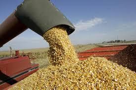 Situación comercial en el mercado de granos de Argentina