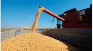 Los embarques estimados de maíz en agosto son los más altos de la historia