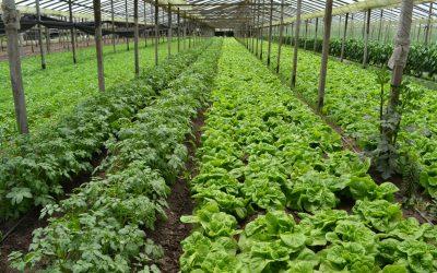 Aprueban proyectos hortícolas agroecológicos para 2400 productores