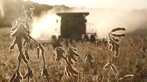 En 2021. Por segundo año consecutivo será menor la cosecha y caerá 3% el ingreso de dólares