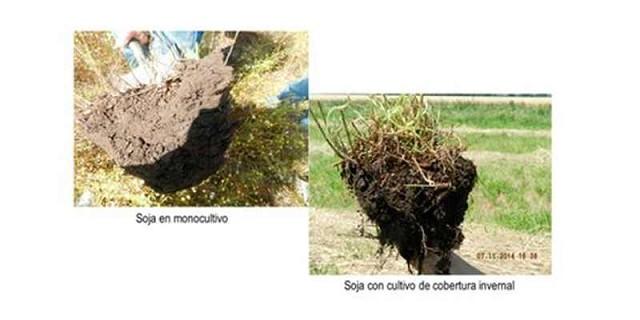 Capacidad de secuestro de carbono de los suelos pampeanos