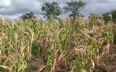 El clima del futuro: qué son las sequías ecológicas, un saldo del calentamiento global que se viene