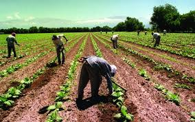 La UATRE acordó nuevos incrementos salariales para los trabajadores rurales