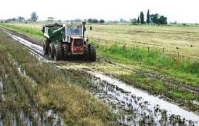 Prevén lluvias moderadas a abundantes sobre el extremo nordeste del área agrícola