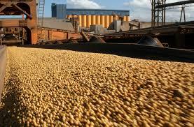 En el mercado doméstico se llevan negociados casi 34 millones de toneladas de soja