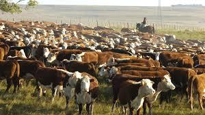 Dos mercados ganaderos diferentes: la demanda interna y la externa