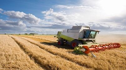 La agroindustria cervecera, importante pilar agroexportador y de consumo masivo