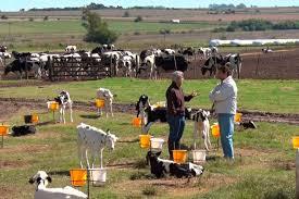 Estímulo oficial para el desarrollo y saneamiento de los tambos de la agricultura familiar