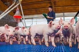 La Federación de Productores Porcinos considera clave al Senasa para afianzar la producción