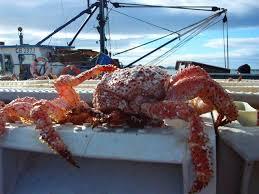 Se habilitó la primera planta procesadora de pescados y mariscos más austral del país