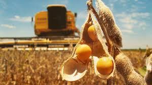 Pérdidas por caída en el nivel de proteína de la soja